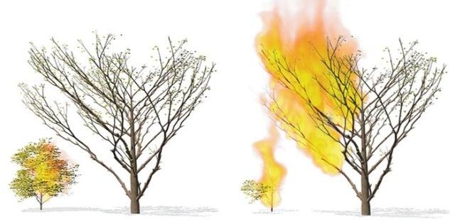 نموذج محاكاة لحرائق الغابات