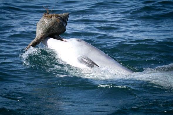 الدلافين تكتسب مهارات اقتناص فرائسها من تجارب أقرانها
