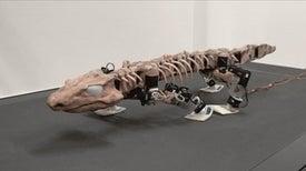 """""""روبوت"""" يُحاكي طريقة سير """"الفقاريات رباعية الأطراف"""" قبل 300 مليون سنة"""