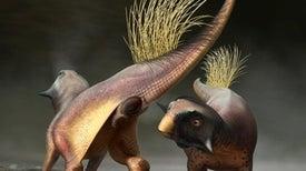 أول وصف تفصيلي لفتحة المَجمَع لدى الديناصورات غير الطيرية