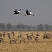 الحياة البرية يمكنها حماية نفسها من الانقراض