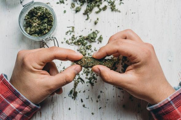 الماريجوانا قد لا تكون سببًا في انخفاض معدل ذكائك