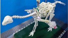 الديناصورات تعمدت تدريب أجنحتها على الطيران