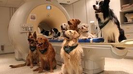 قدرة الكلاب على الفهم أكبر مما كنا نتصور!