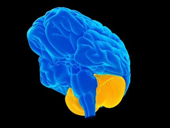 """المخيخ هو """"دماغك الصغير"""" الذي يضطلع ببعض الأمور الكبيرة جدًا"""