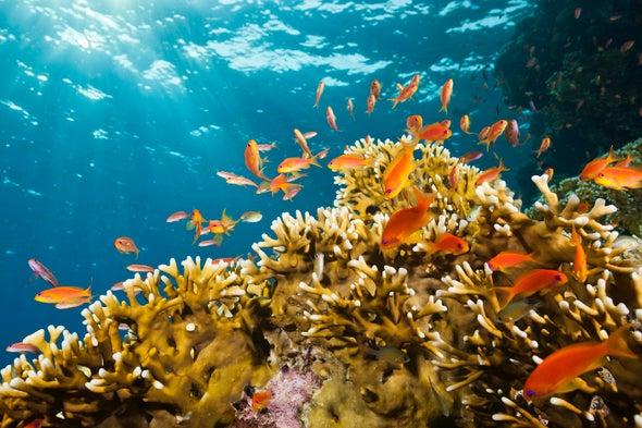الإدارة العادلة للمحميات البحرية
