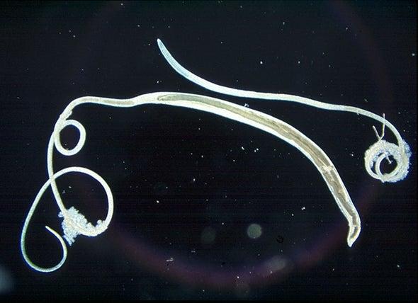 العثور على طفيليات معوية أصابت البشر قبل 8000 عام