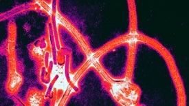 متى سيكون لدينا لقاح لفيروس إيبولا؟