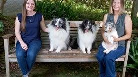 طفرة جينية وراء صغر حجم أجسام بعض الكلاب