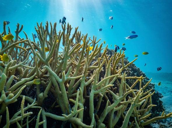 تحمُّض المحيطات لا يهدد أسماك الشعاب المرجانية