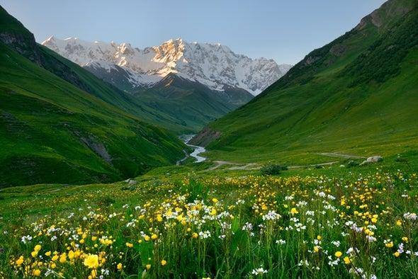 """النباتات تهرب من الاحتباس الحراري بـ""""اللجوء لقمم الجبال"""""""