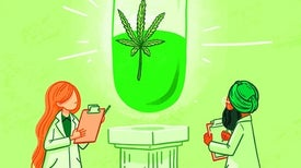 هل تفيد الماريجوانا في علاج الألم؟