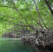 «الكربون الأزرق».. أداة فعالة للحد من انبعاثات الكربون