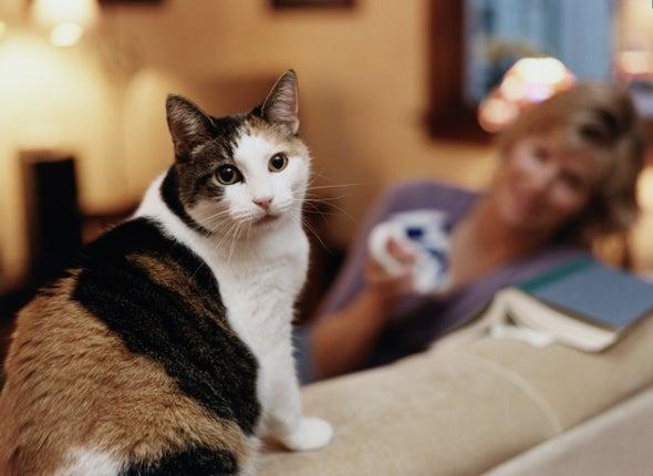 تربية القطط تحمي الأطفال من «الربو»