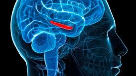 آلية استذكار الدماغ لاتخاذ قرارات.. ليست بهذه السرعة