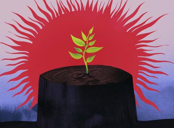الغابات وسيلة بسيطة ولكنها ذات تأثير كبير لمكافحة تغيُّر المناخ