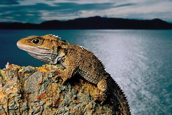 هل يستطيع العلماء إنقاذ الأنواع المهددة بالانقراض عن طريق إعادة توطينها؟