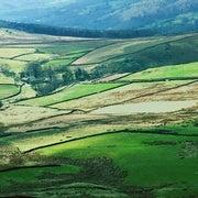 الآفات الزراعية تهدد 5 محاصيل رئيسية حول العالم