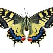 هل اكتشف العلماء حديقة فراشات من العصر الترياسي؟