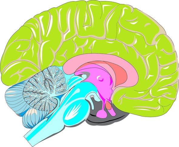 هنري مولايسون.. قصة مريض أحدثت دماغه ثورة في علم الأعصاب