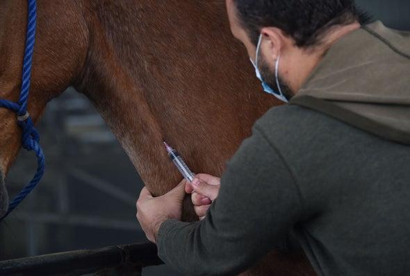 كوستاريكا تُعِدّ الأجسام المضادة من الخيول لتجربتها كعلاج اقتصادي لفيروس «كوفيد-19»