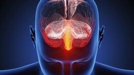 الكشف عن آلية الإصابة بالصرع الرمعي