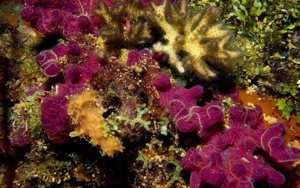 الشعاب المرجانية حائط الصد الأول ضد الفيضانات