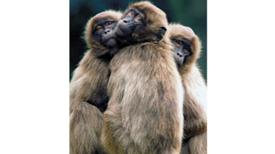 الفوائد البيولوجية للصداقة