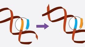 جزيء يضمن التحكم في تقنية كريسبر