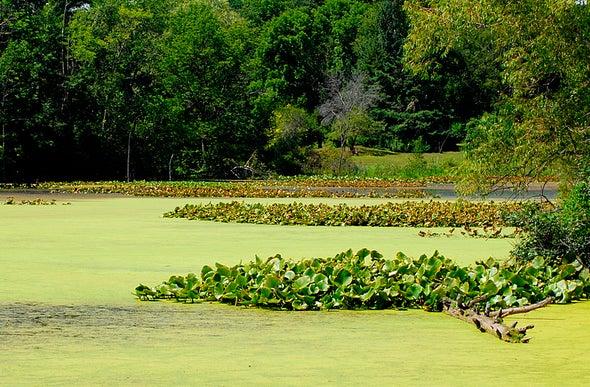 اخضرار البحيرات يزيد من انبعاثات غازات «الصوبة الزجاجية»