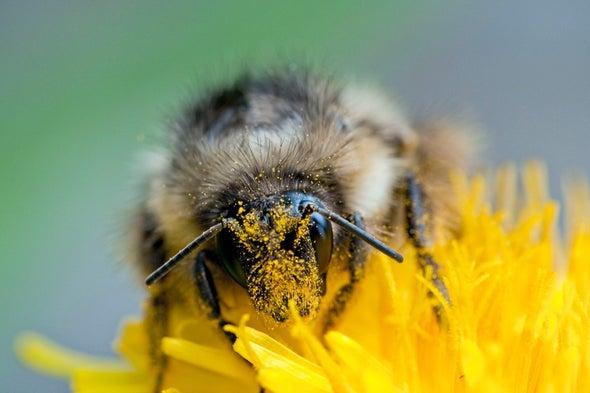 قانون جديد يمكن أن يساعد النحل، لكنه قد يترك الملقّحات الأخرى لقَدَرها
