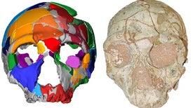 جمجمة لـ«الإنسان العاقل» خارج أفريقيا قد تغير مسار التاريخ البشري