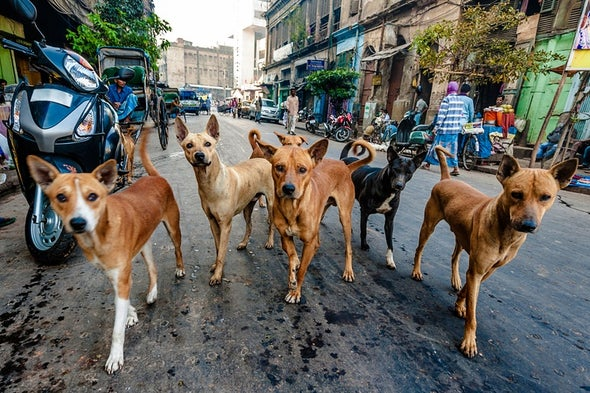 اكتشاف بكتيريا فائقة المقاومة للمضادات الحيوية لدى الكلاب المصرية