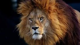 ملوك الحُمَّى