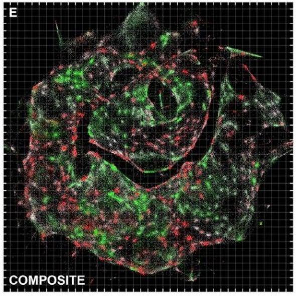 طريقة جديدة لتصوير محتويات الخلايا