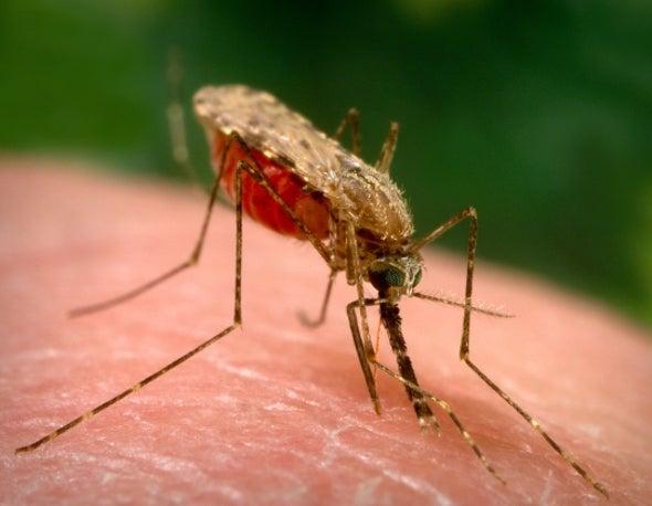 """الجزائر خالية من مرض """"الملاريا"""""""