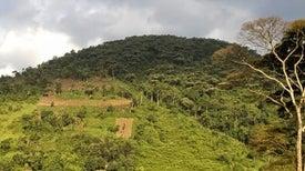 إنتاجية أراضي المناطق المحمية تتفاوت حول العالم