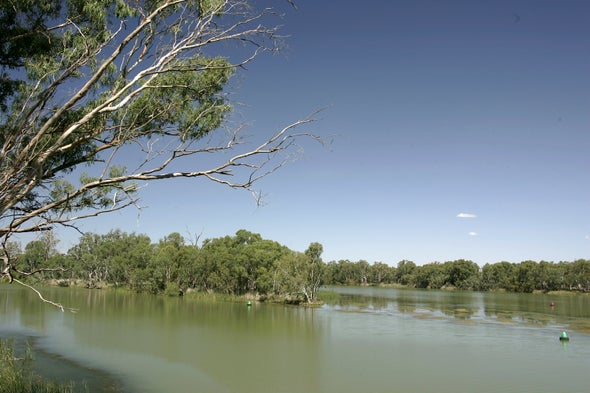 نفوق الأسماك في أستراليا بسبب الموجات الحارة