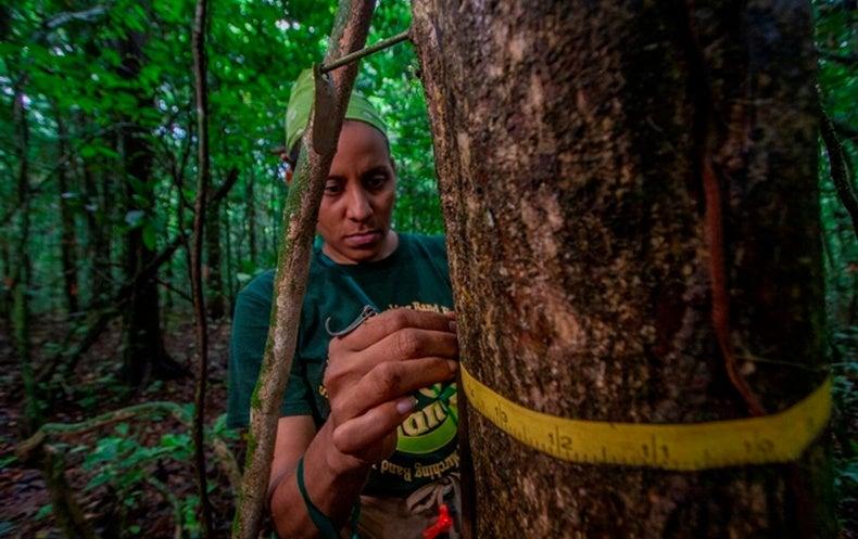 أشجار الغابات الاستوائية المعمرة أفضل مخازن للكربون للع لم