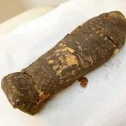 الأشعة المقطعية تكشف حقيقة «مومياء الصقر»
