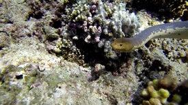 الثعابين البحرية ناضلت 15 مليون عام لترى الألوان