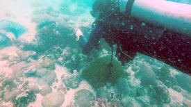 منظومة إنذار من أمراض المرجان