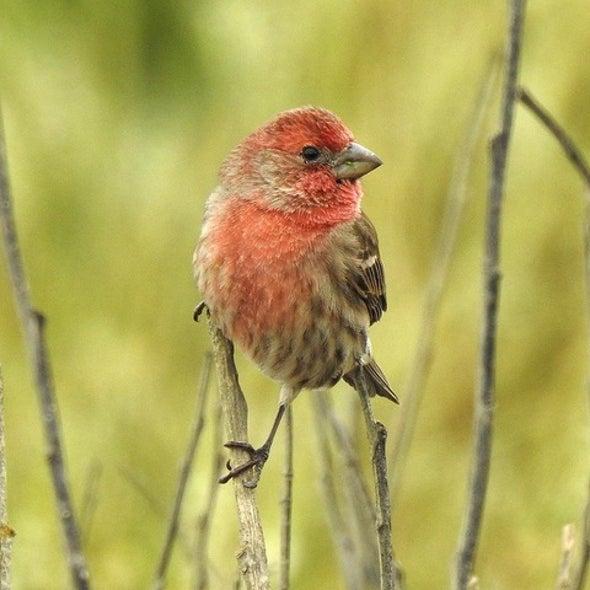 الضوء والضوضاء يضران بعادات تعشيش الطيور