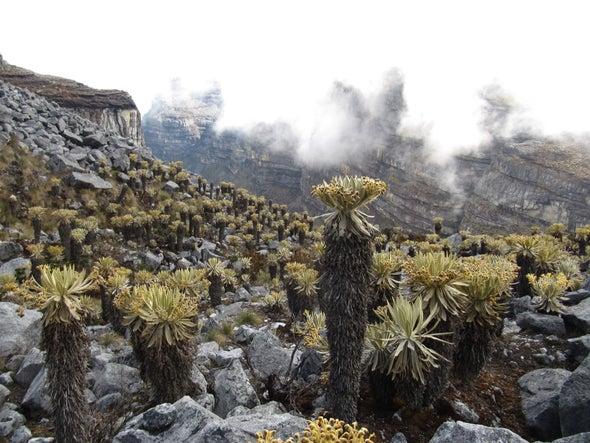 الأنواع النباتية في «جزر السماء» معرضة للاندثار