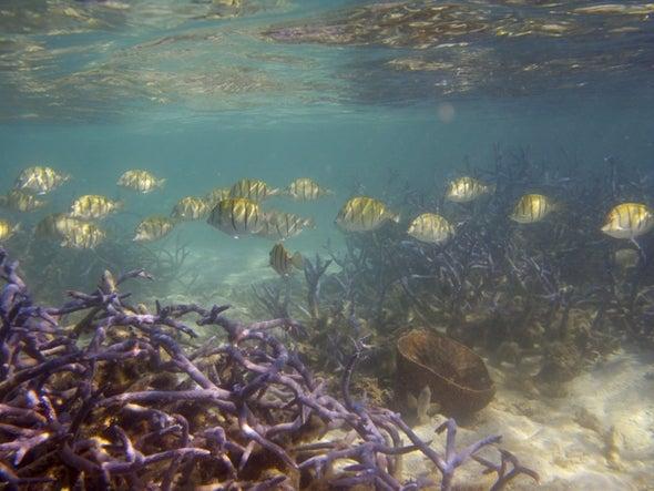الغطاء المرجاني تراجع بمقدار النصف منذ خمسينيات القرن الماضي