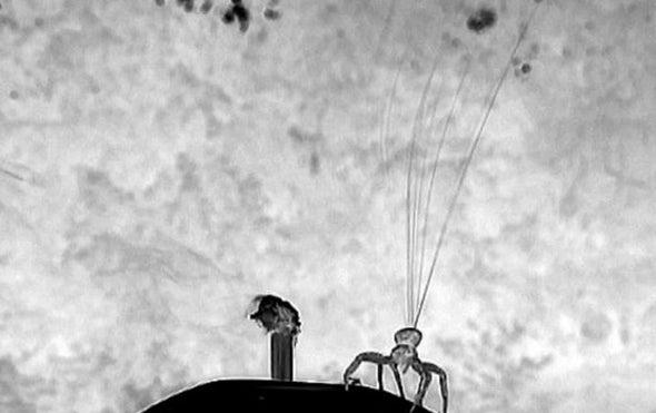 العناكب تستشعر الأحوال الجوية قبل التطاير