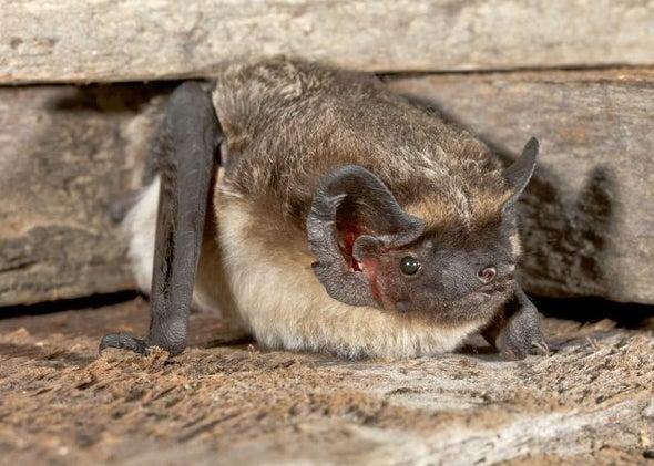 خفافيش سويسرا تؤوي فيروسات متنوعة