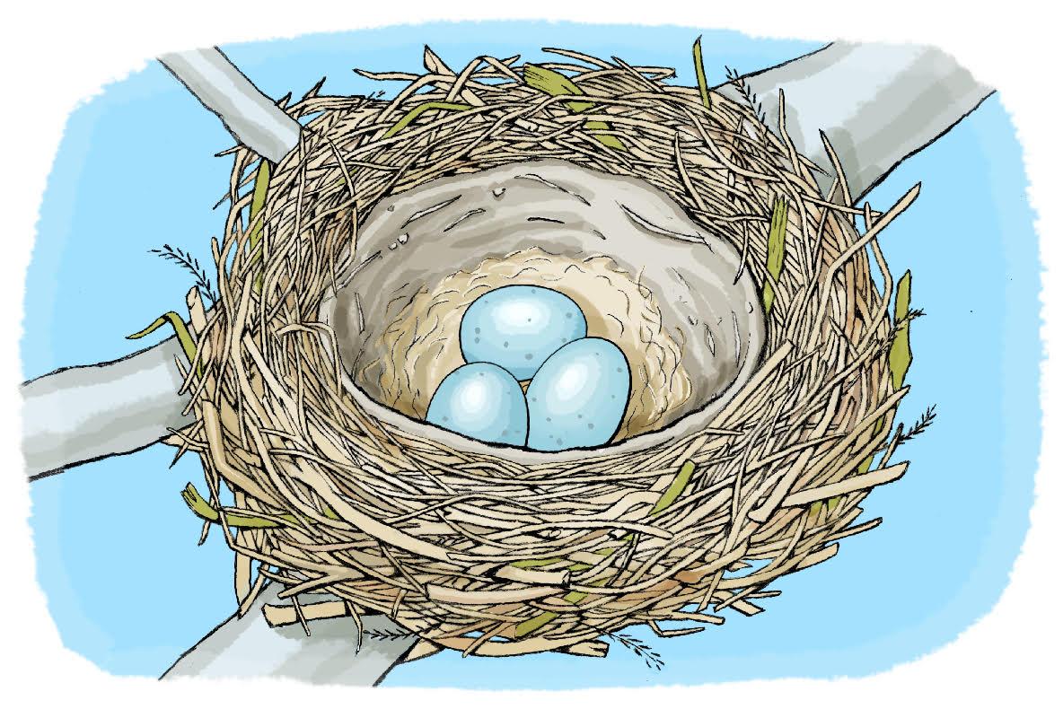 اكتشف البراعة الهندسية للطيور في بناء أعشاشها للع لم