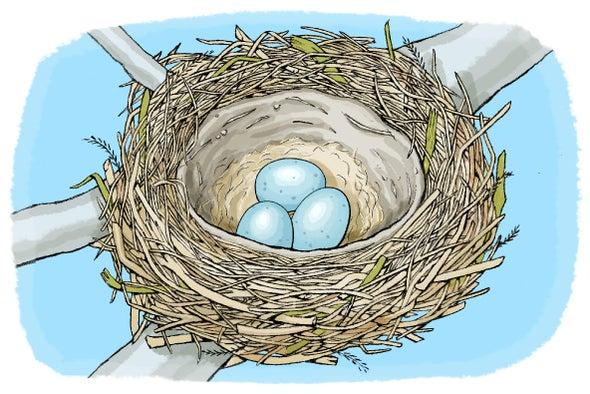 اكتشف البراعة الهندسية للطيور في بناء أعشاشها