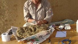لقاء في «جارة جهنم» يقود لاكتشاف أصغر حوت بدائي